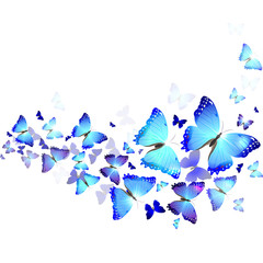 background of blue butterflies