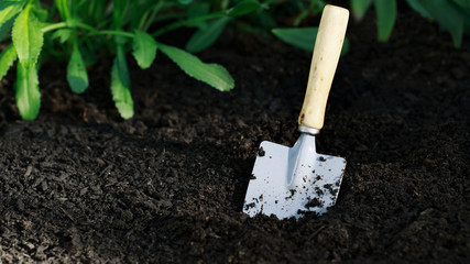 Garden small shovel in vegetable garden