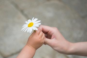 花を手渡す親子の手