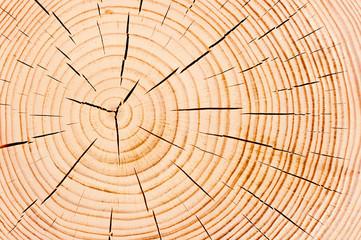 annual tree rings, fine texture closeup