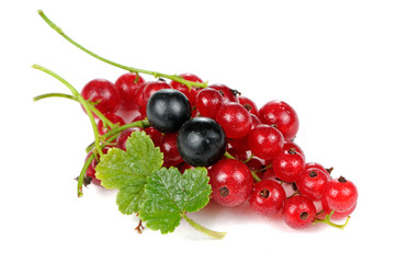 Red and Blackcurrants Isolated on White Background
