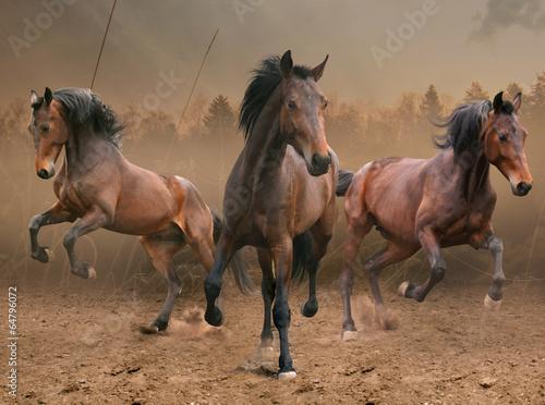 three horses - 64796072