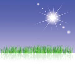 green grass and sun