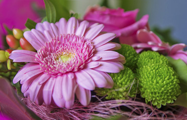 Close up of pink gerbera flower