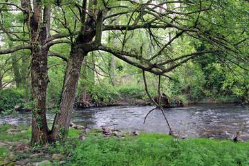 Vegetación en río Ambroz, Aldeanueva del Camino, España