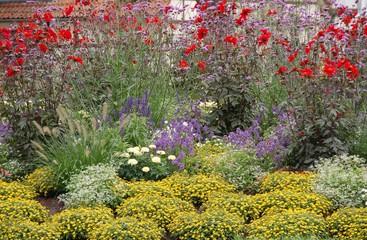 Bunter Blumenmix im Vorgarten
