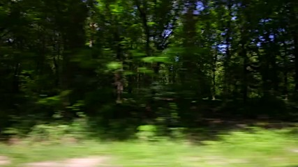Driving a car through the forest
