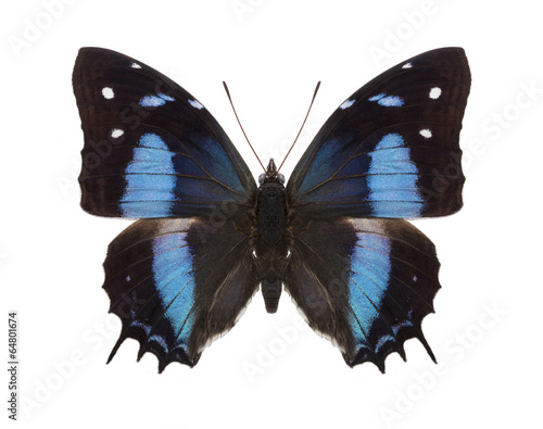 Deurstickers Vlinder tropical butterflies collection Baeotus aeilus