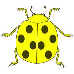 黄色のてんとう虫