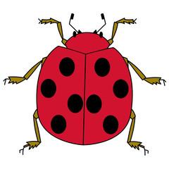 赤い色のてんとう虫