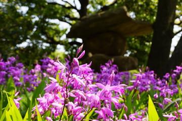 清澄庭園の春
