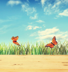 Summer composition with green grass and two butterflies