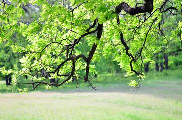 дерево 5