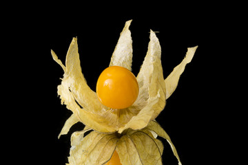 Physalis on a black background
