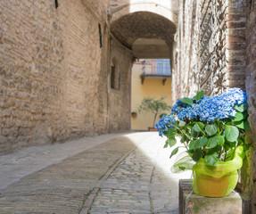 Vaso con fiori nel vicolo