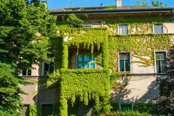 Facciata palazzo signorile con rampicanti edera, Milano