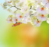 Fototapety Spring beautiful nature background