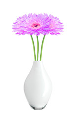 beautiful purple gerbera daisy flowers in vase isolated on white