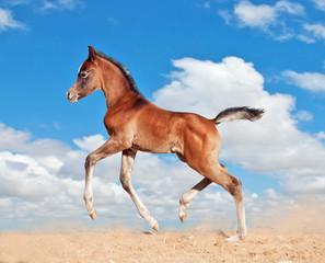 foal little horse baby run trot
