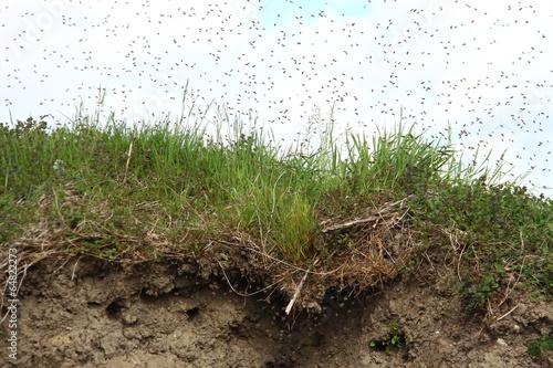In de dag Bee bienen schwaermen XIII