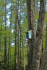 森の中の巣箱