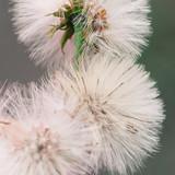 white flower - 64825497