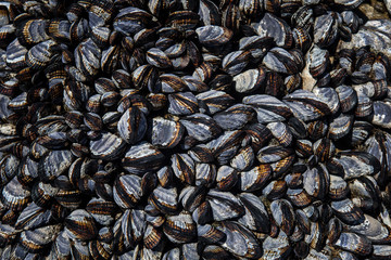California Mussels 1