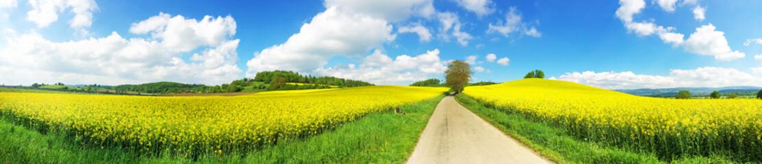 Panoramaaufnahme Rapsfeld und Weg
