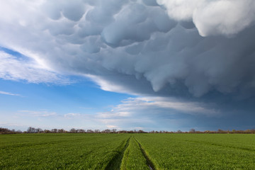 Mammatus clouds above a green grass with a road