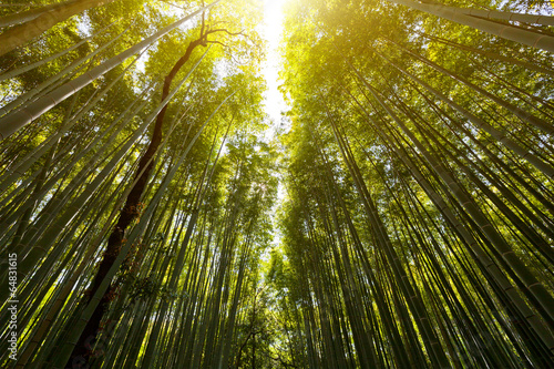 In de dag Bamboo The flourish bamboo forest with glorious morning sunshine