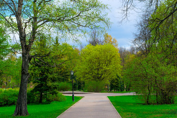 blank green spring park in Novgorod