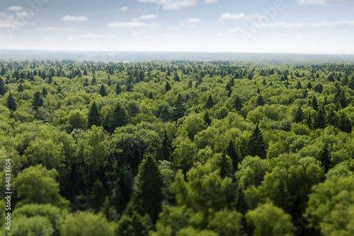flight over forest