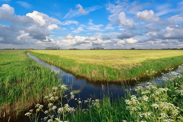 blue sky over Dutch farmland