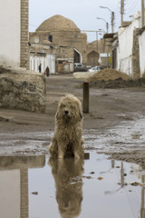 A stray dog sitting in a muddy puddle