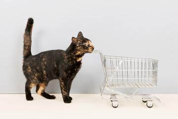 Tortoiseshell cat with shopping cart