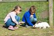 Kids feeding rabbits - 64835600