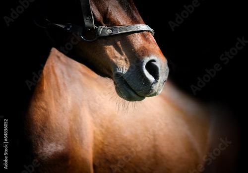 Horse - 64836052