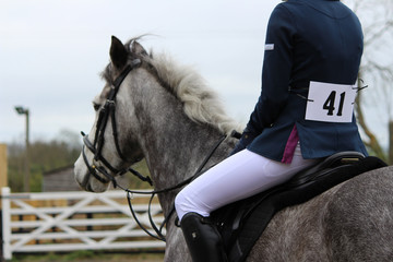 Grey Show Jumping Pony