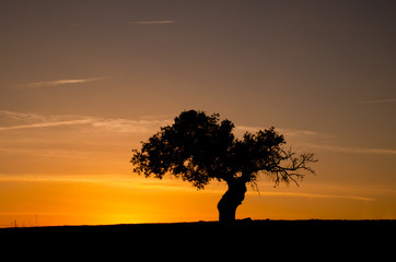 Tree silhouette at sunset with orange sky