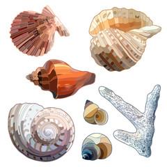 Set of Sea Shells And Coral.