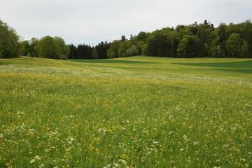 Frühlingswiese auf der Schwäbischen Alb