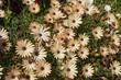 Spring flowers, Greece