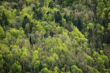 Wald am Albtrauf im Frühjahr