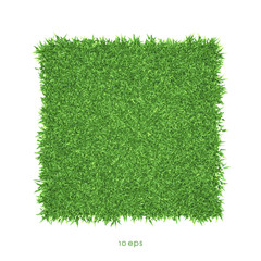 Vector - Green grass background illustration