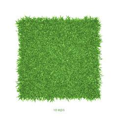 Vector - Green grass background illustration
