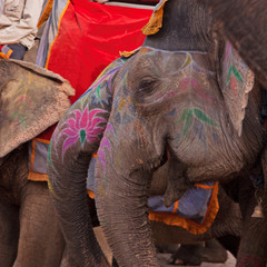 Decorated young elephants at Amber, India