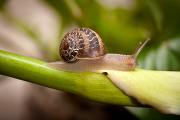 garden snail crawling on plant