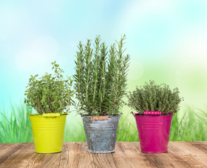 Various herbs in colored pots