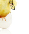 Cute little chicken coming out of a white egg - 64852662
