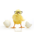 Cute little chicken coming out of a white egg - 64852677